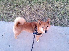 """taro shiba: """"i would very much appreciate it if you would put the camera down and let us continue our walk."""""""
