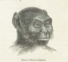 Image taken from page 444 of 'Explorations and adventures in Equatorial Africa; with accounts of the manners and customs of the people and of the chace of the gorilla, crocodile, leopard, elephant, hippopotamus and other animals. (Second edition.)'