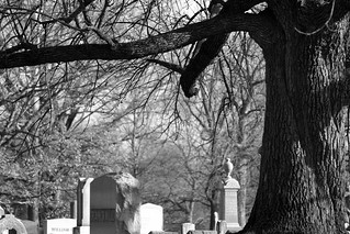 Tree and Tombs