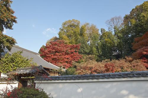 【写真】紅葉 : 御陵衛士屯所跡