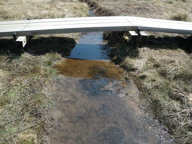 導水路に卵塊がいくつもかたまってあった.