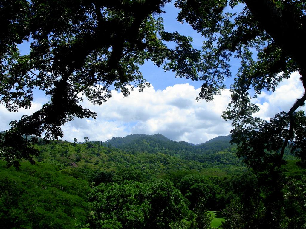 15. Otro detalle de la selva hondureña. Autor, Mike Fox