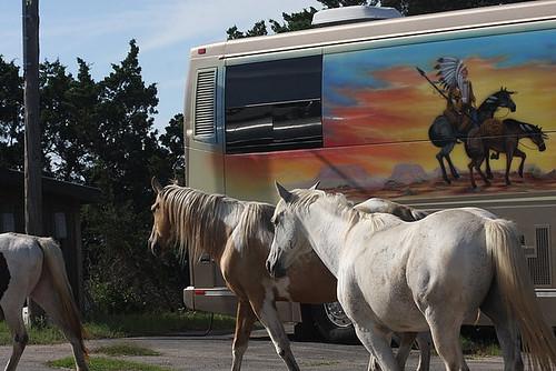 bushorses
