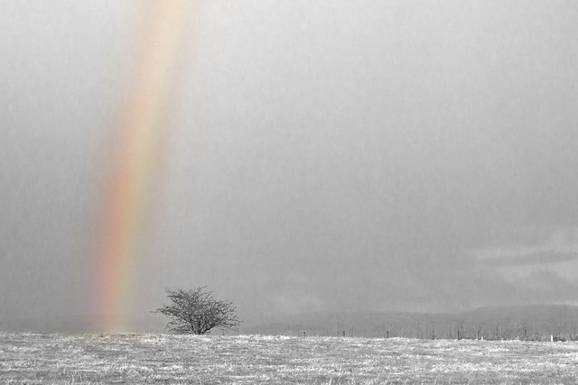 beyond the rainbow bridge pdf