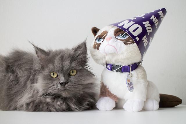 Grumpy Cat Birthday_5