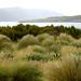 Tucker Point Endemic Revegetation Landscape Perseverance Harbour Campbell Island Subantarctic New Zealand UNESCO World Heritage Status Nature Reserve