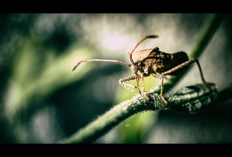 Le mie macro ( con Sigma 105 f/2.8 ) : insetti e non solo ... 13900639634_cab75028b4_c