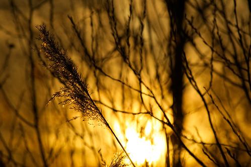 Golden Hour - Azewijns Broek