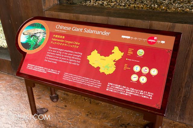 River Safari - Chinese Giant Salamander