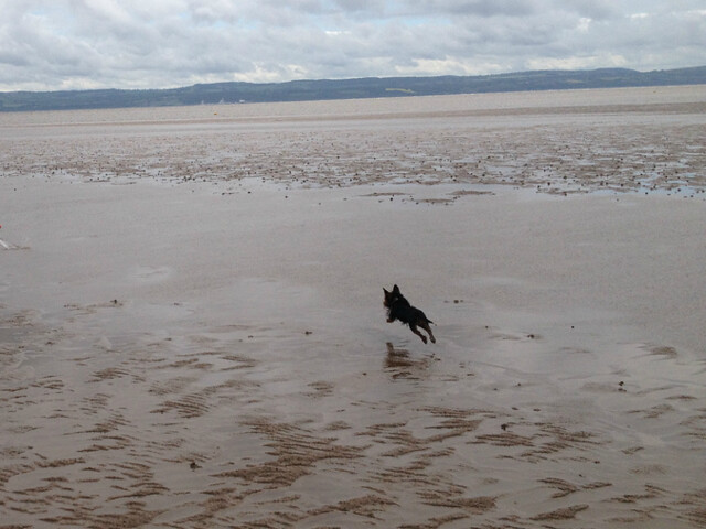 small_dog_on_uk_beach