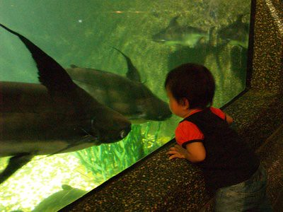 20130412_kl3_aquaria_catfish