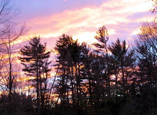 sunset sky pinkblue bss treesilhouettes autumn2012