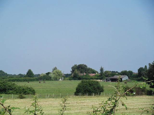 Chevaux et champs fauchés
