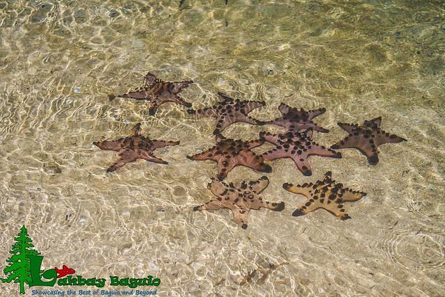 honda-bay-starfish-island