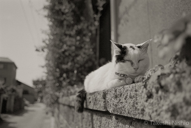寝猫 / Sleeping
