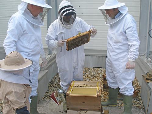 Princesshay beekeepers