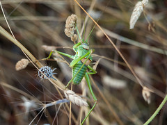 animal, branch, nature, invertebrate, insect, macro photography, flora, green, fauna, close-up,