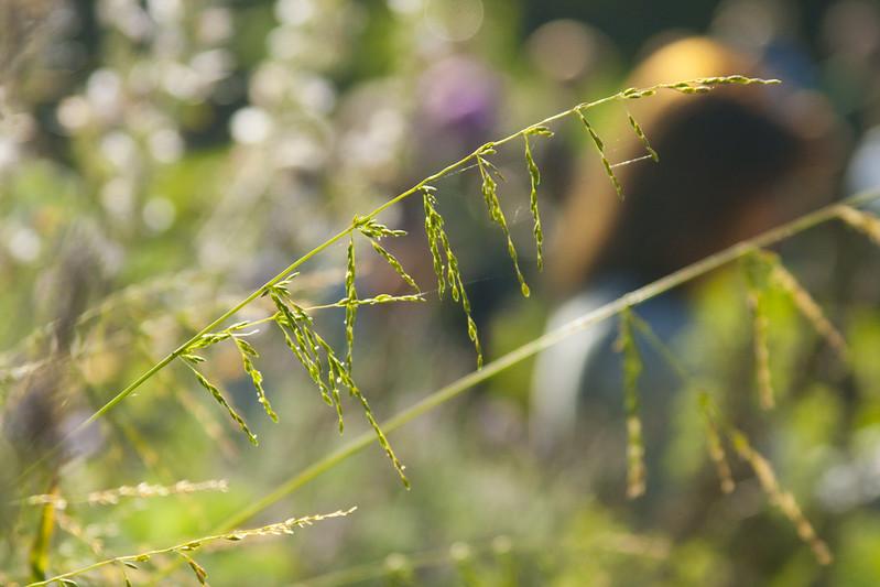 SFBG grass wands