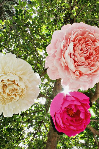 Crepe Paper Peony Pinatas on display in tree