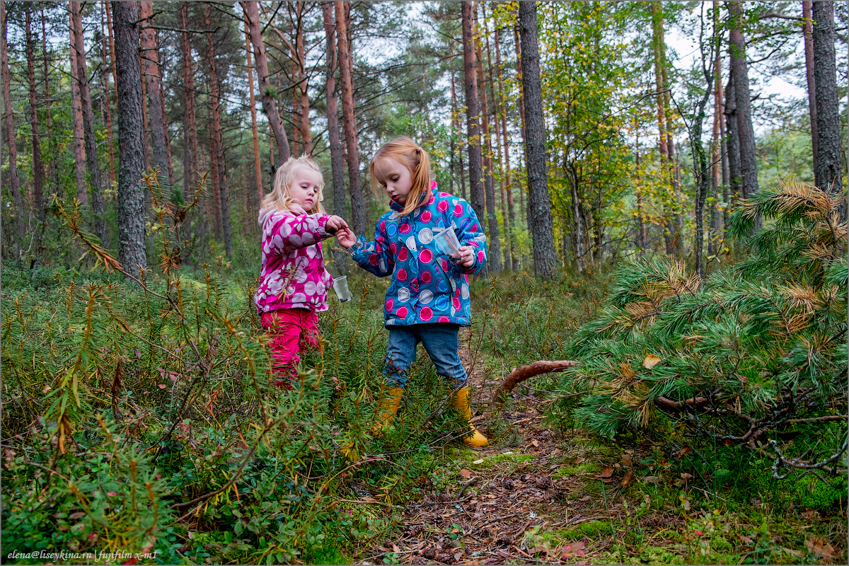 Фотографируем в лесу