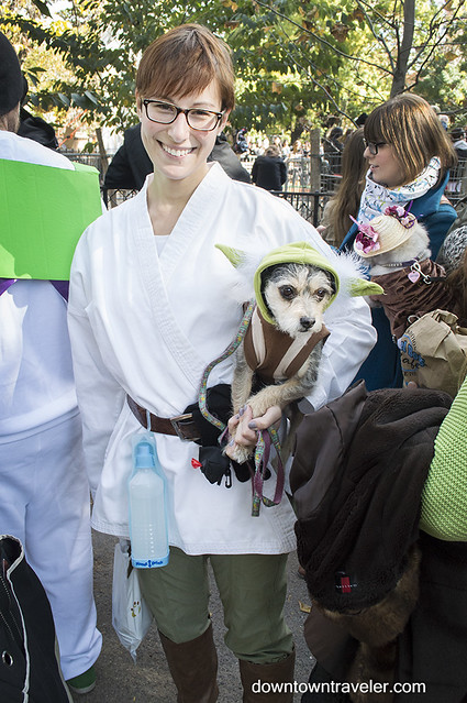 Halloween Dog Costume_Yoda_Brilla the Terrier Mix