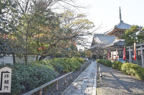 【写真】紅葉 : 本法寺