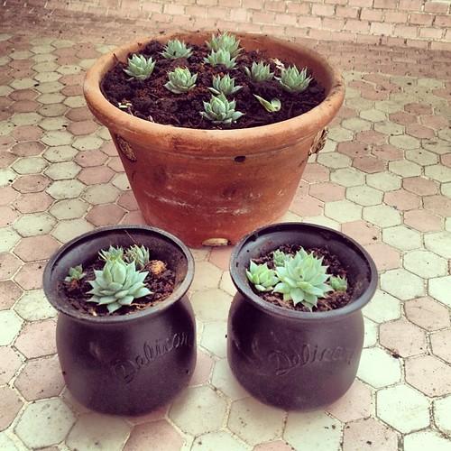 Preparando presentinhos pra amigos q gostam de plantas