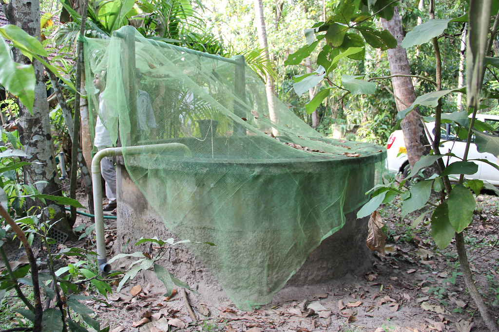 A well in an orchard in Kerala is covered with netting