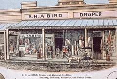 murray_street_bird_sha_draper_mdjh7
