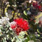Spikey lava plant