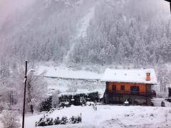 Snowy Courma