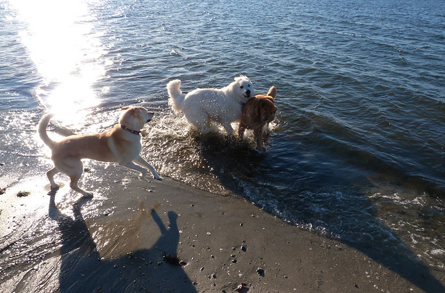 dogs_beachjan12_3