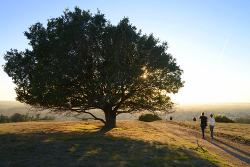 Sunset Approaches at Knowland Park, Oakland, California