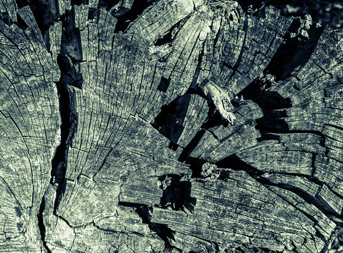 tree stump (black and white) by joeeisner