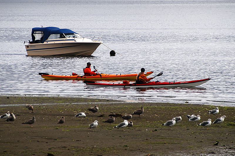 Kayakers in Toquart Bay setting off for the Broken Group Islands, Barkley Sound, Vancouver Island, British Columbia