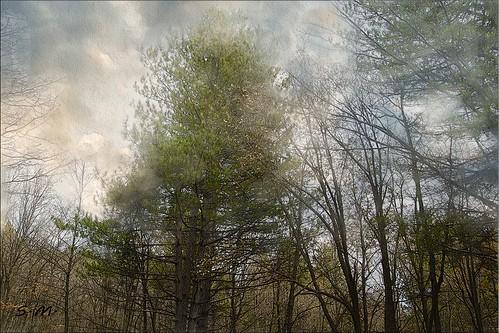 italy verde texture alberi nuvole natura sicily nebbia elaborazione artdigital