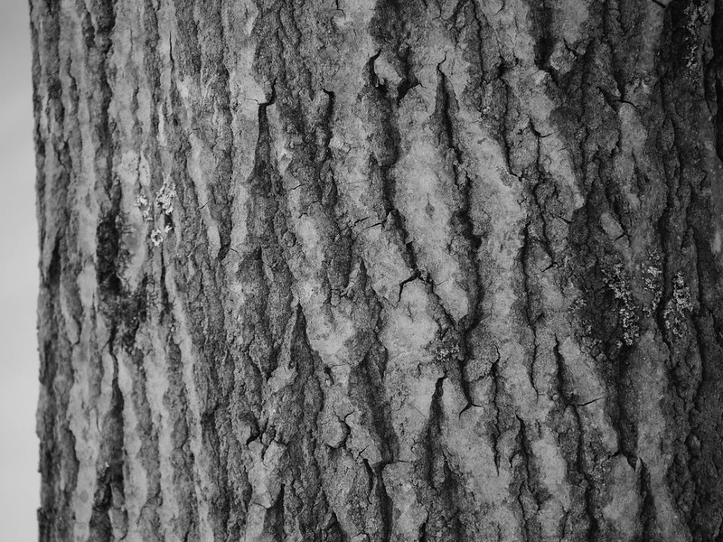 Rivers in bark