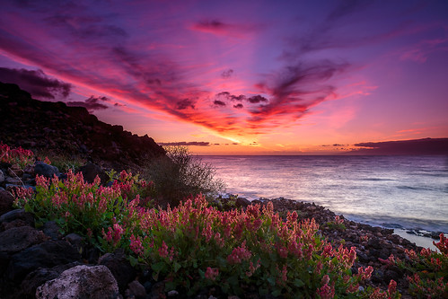ocean flowers sunset sky sun flower water canon coast meer wasser sonnenuntergang burning filter shore sonne hitech küste ozean formatt canonef24105mmf4lisusm 5dmarkiii