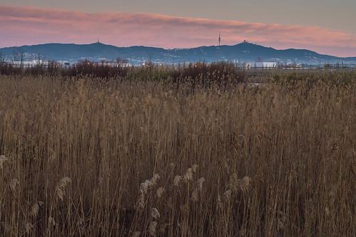 El Delta del Llobregat al Alba Barcelona by Tito Garcia Niño
