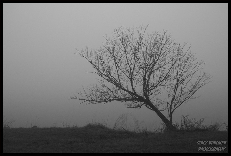 A Single Tree in the Mist