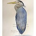 Day 6 heron