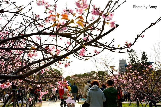 麗池櫻花12