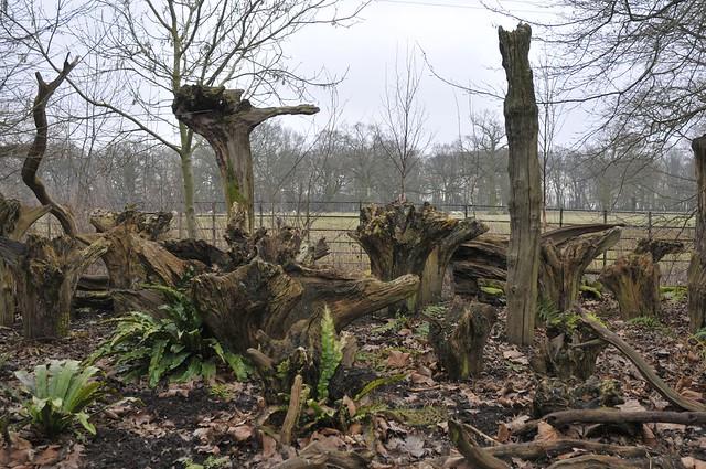 Wimpole Hall stumpery #1