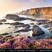 UK - England - Devon - Hartland Quay & its dramatic coastline with Sea Pink or Purple Sea Thrift Flower in bloom by © Lucie Debelkova / www.luciedebelkova.com
