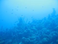 Ocean Floor V