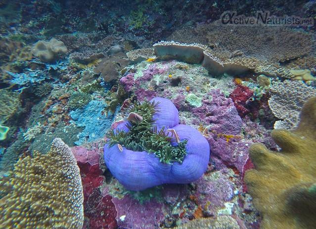coral reef 0007 Raja Ampat, Papua, Indonesia