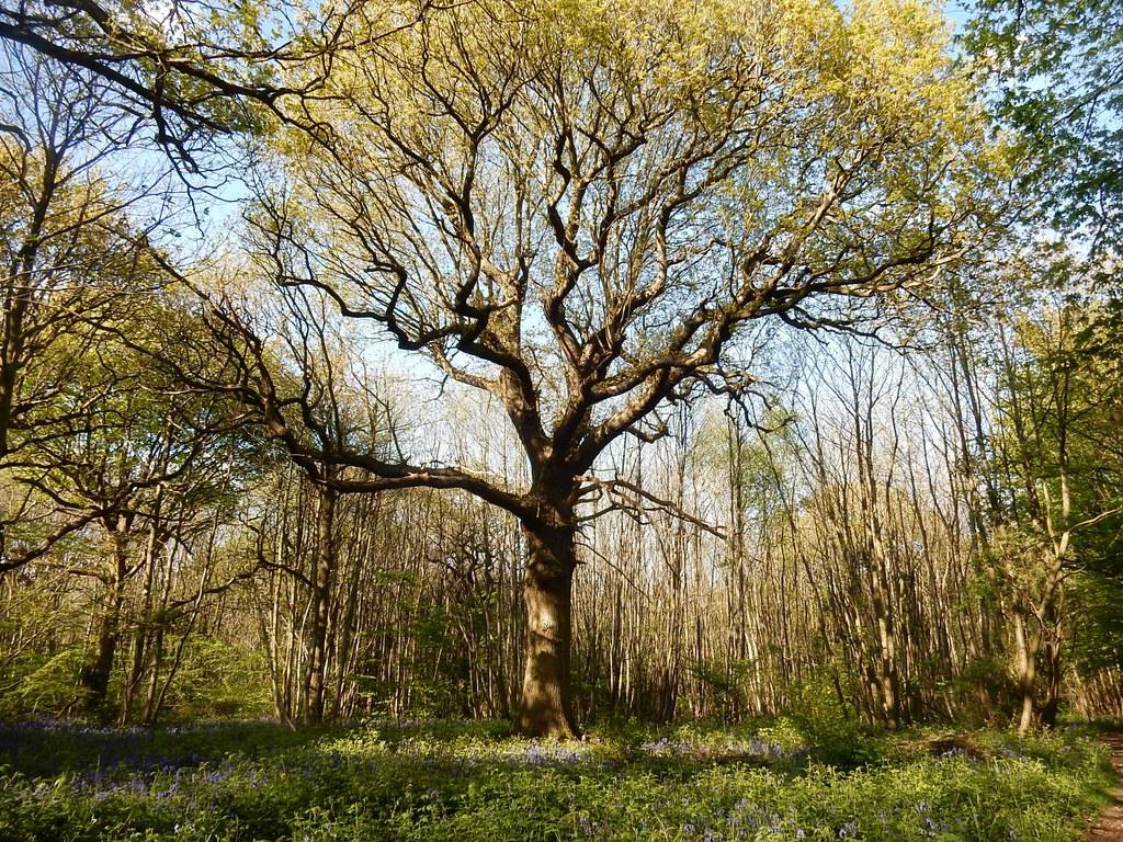 Nice tree Cuxton Circular