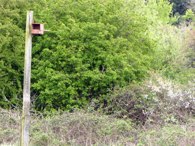 Woods Mill Nature Reserve, Panasonic DMC-TZ60