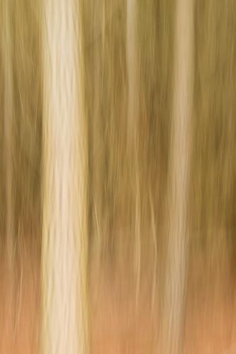 20170418_5459_7D2-38 Blurred Trees