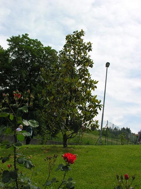 MOSCATO  BIS 114, Nikon E8800